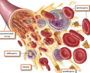 состав крови - рисунок