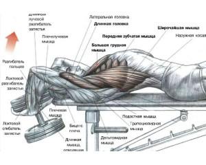 Пуловер - анатомический рисунок