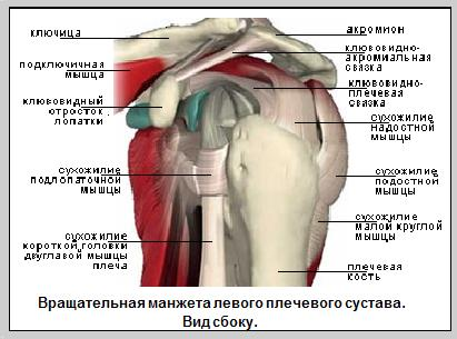 Как укрепить мышцы-стабилизаторы плечевого сустава проблема с локтевым суставом