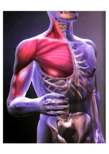 анатомические картинки