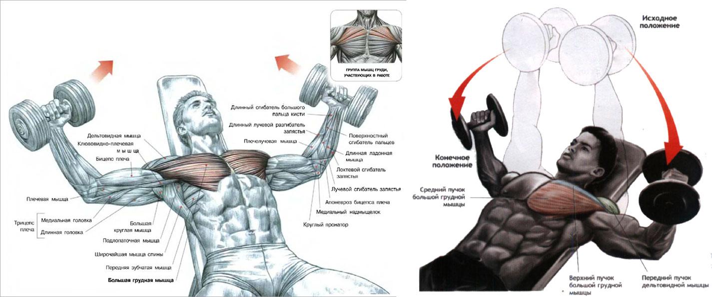 Укрепление мышц груди 13 фотография