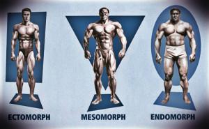 эндоморфный, эктоморфный и мезоморфный