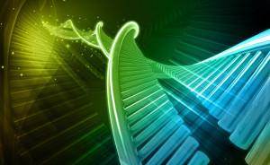 основания ДНК
