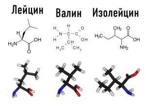Аминокислоты с разветвленной цепью