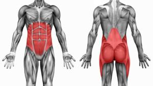 Мышцы ядра