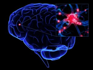 клетки головного мозга