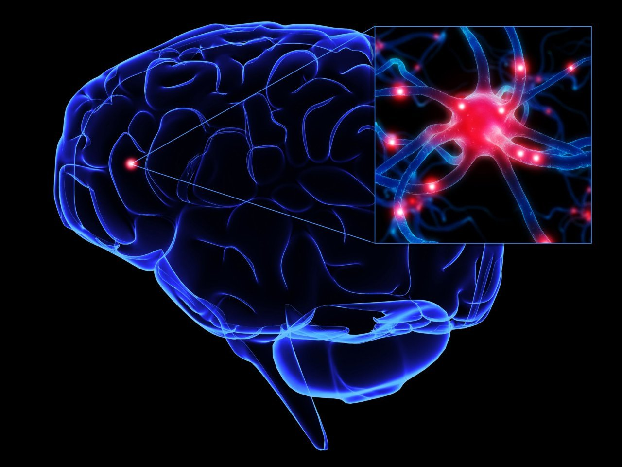 marijuanas effects on the human physiology and the brain