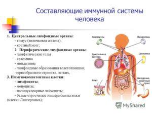 Составляющие иммунной системы
