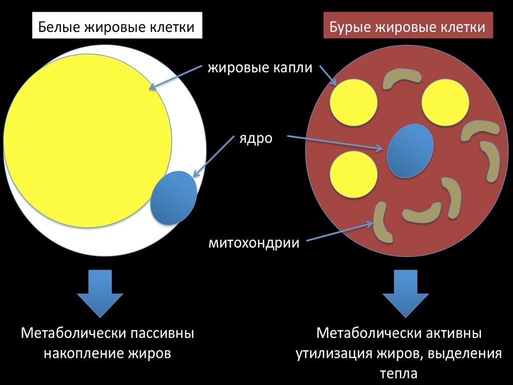 эко пилс для похудения аналоги
