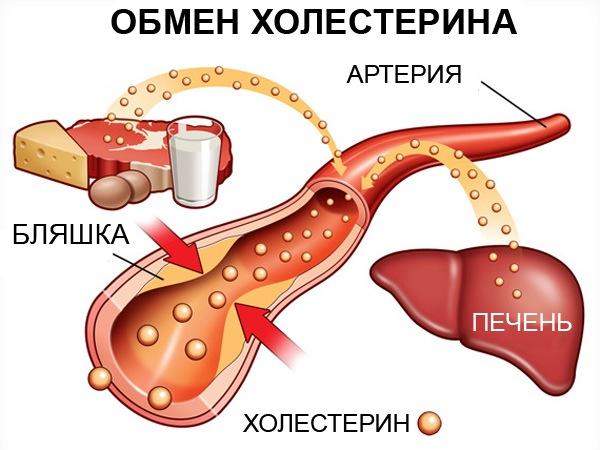Что такое холестерин и какую роль он играет для здоровья?   Спорт и Здоровье