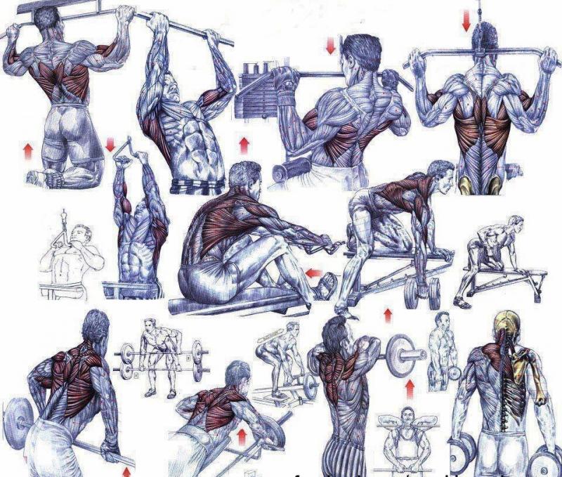упражнения в картинках по бодибилдингу и фитнесу открытки праздники